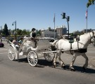 Carriage Ride on Government Street