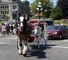 Horse and Carriage Tour Victoria, BC
