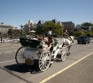 Horse and Carriage Tours Victoria, BC